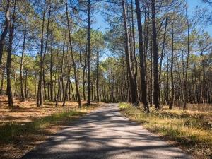 Itinéraire à vélo en Gironde de la pointe de grave au bassin d'Arcachon