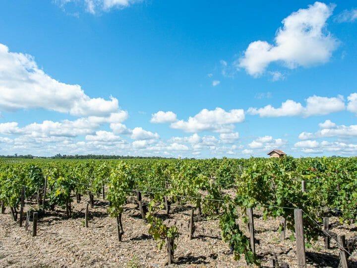 Route des vins du médoc
