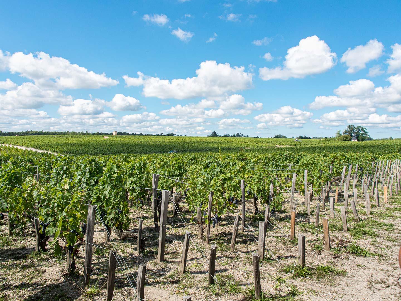 Itinéraire de la route des vins du Médoc en Gironde