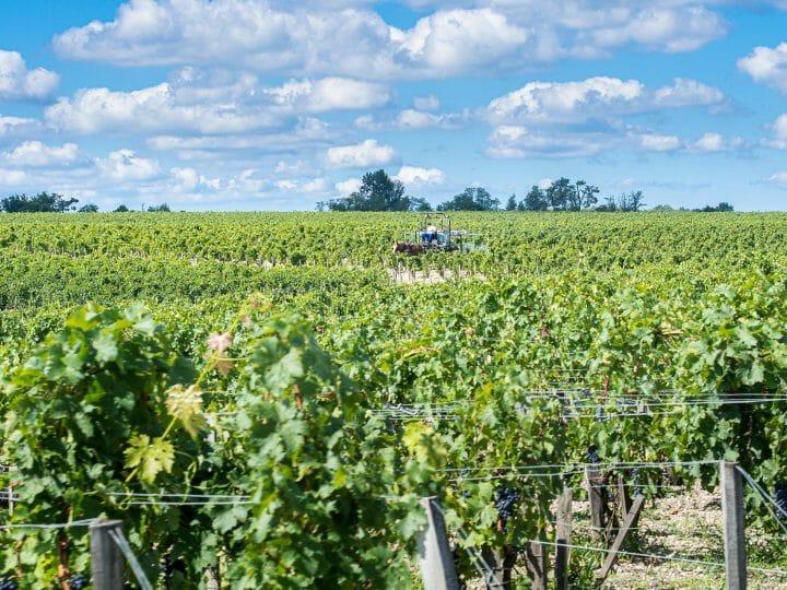 Vignes du château Pontet Canet sur la route des vins du médoc en Gironde